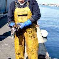 Fisherman with cuttlefish at Hove lagoon