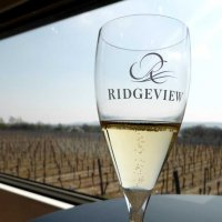 Glass of bubbly at the Ridgeview estate